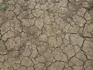 Picture of cracked earth