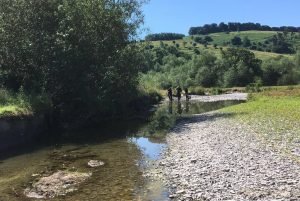 Fish rescues during drought
