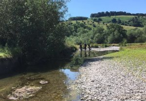 Fish rescue from low flow river